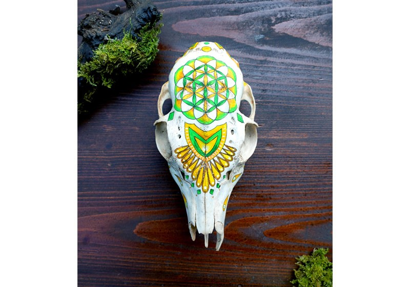 peinture sur vrai crane animal mouton motif fleur de vie peinte